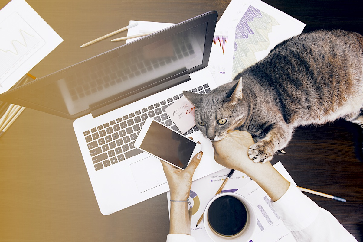 A cat is biting her owner's hand while she is trying to work on her laptop